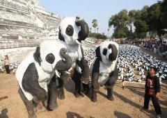 泰国大象玩Cosplay 变妆大熊猫